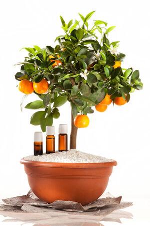 Essential oils of orange tree