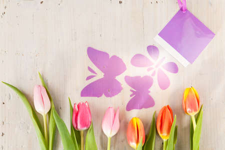awakened: Tulips and butterflies as harbingers of spring