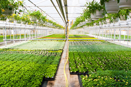 automatically: Irrigation system in a greenhouse Stock Photo