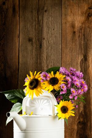 asteraceae: Sunflowers and asters in a watering can