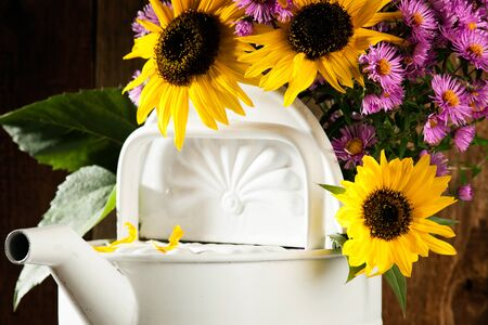 antiquated: Sunflowers and asters in a watering can