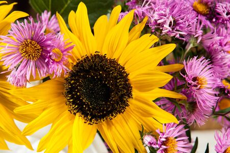 helianthus: Sunflowers and asters in a watering can
