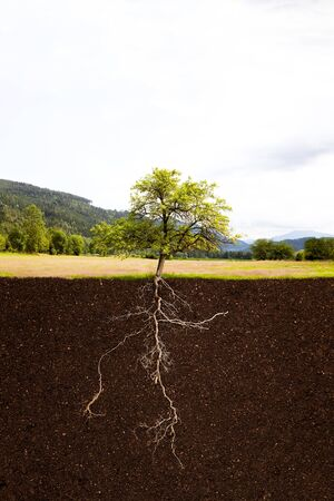 deep roots: Tree with roots