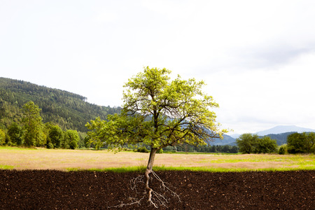 topsoil: Tree with roots