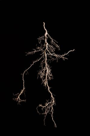 Root against black background