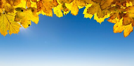 Sun-flooded autumn leaves and bright blue sky with sunshine