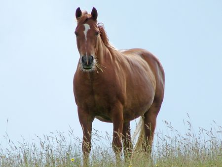 Brown horse Stock Photo - 1117583