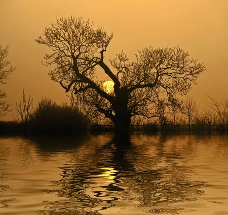 Sun setting behind a tree with a water effect manipulation added Stock Photo - 2269784