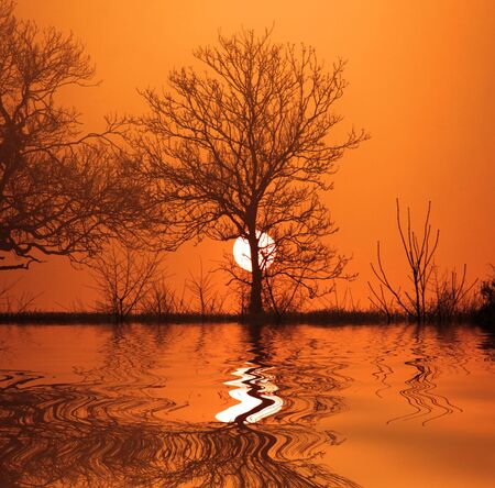 Tree with the sun going down and a manipulated reflection added photo