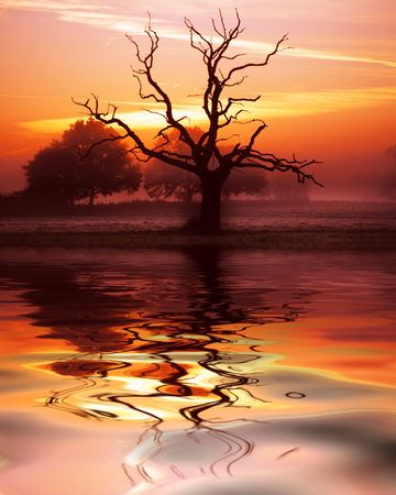 A dead tree silhouette at dawn in the Somerset countryside with reflection added for effect