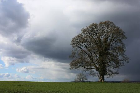 An Oak tree with storm brewing behind with room for text Stock Photo - 4578944