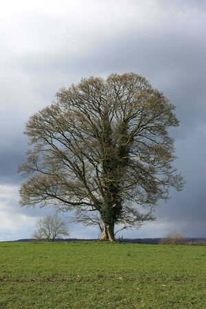 An Oak tree with storm brewing behind with room for text Stock Photo - 4578953