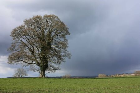 An Oak tree with storm brewing behind with room for text Stock Photo - 4578952