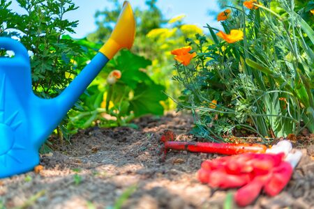On the ground lies a watering can, a hoe and gloves. The concept of home gardening and gardening. Archivio Fotografico