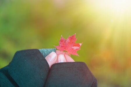 Autumn. A womans hands hold a small leaf of red maple in her fingers, against a blurred background of green grass. Light. Stok Fotoğraf