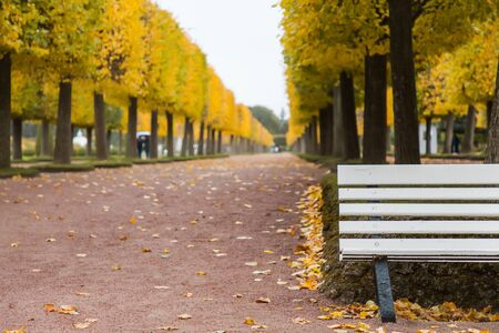 Autumn. Empty bench in autumn park on fall yellow leaves background.