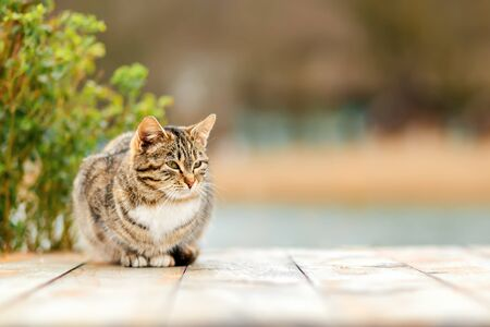 A brown tabby cat sits on a white wooden porch. A Bush in a blur in the background. Copy space. Concept of homeless animals and shelter for them,
