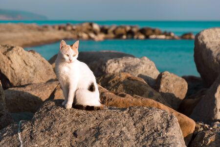 A black and white stray cat sitting on a rock near the sea. Sunset light.