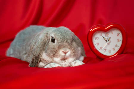 World sexual health day. On a red silk background lies a rabbit and there is a clock in the form of a heart. The concept of Valentine's day. Stock Photo