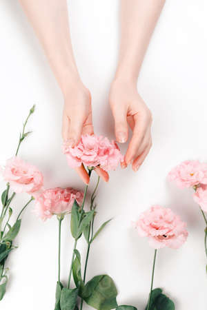 Delicate female hands hold a pink eustoma flower. White background. Vertical. The concept of natural beauty.