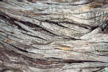 Textures of juniper bark. Horizontal stripe.