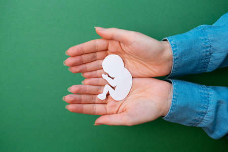 Female hands hold a paper-cut silhouette of a fetus. Green background. Flay lay. Copy space. Close up of hands. Concept of artificial insemination and pregnancy. Banque d'images