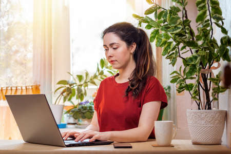 Freelance.A young, pretty woman is typing on a laptop while sitting at her Desk. Home decor, the sun outside the window. The concept of quarantine, self-isolation and remote work.