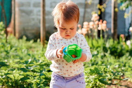 Portrait of cute caucasian toddler holding a plastic toy bucket with strawberrie. In the background is a vegetable beds and flower garden. Seasonal harvest concept.
