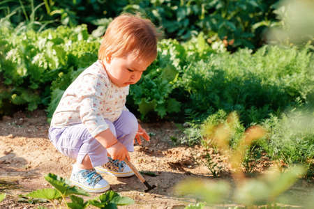 Cute toddler girl learns to weed the soil with a toy hoe. In the background, there are lettuce beds. The concept of gardening.