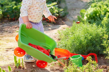 Close up of cute baby playing with a plastic cart in the vegetable garden. In the background lettuce beds. Gardening concept and educational games.