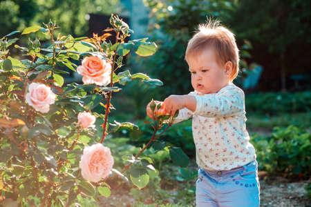 Gardening. Portrait of a caucasian toddler girl touching the rosebuds. Summer garden in the backyard.