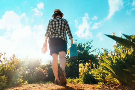 A woman with gloves and a watering can in her hands is walking through the garden. Rear view. Bottom view. The concept of gardening.