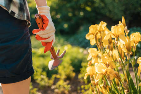 A gloved woman holds a hoe. Hand close-up. In the background, flowering bushes of yellow irises. Gardening concept.
