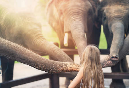 blonde girl feeds five elephants. lighting.the view from the back.