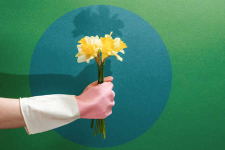 A hand in a rubber glove holds a bouquet of daffodils. Copy space. Green background with dark circle. The concept of cleaning, freshness and cleanliness.