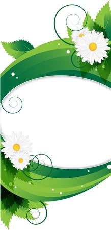 lush foliage:  white daisies and  lush foliage background