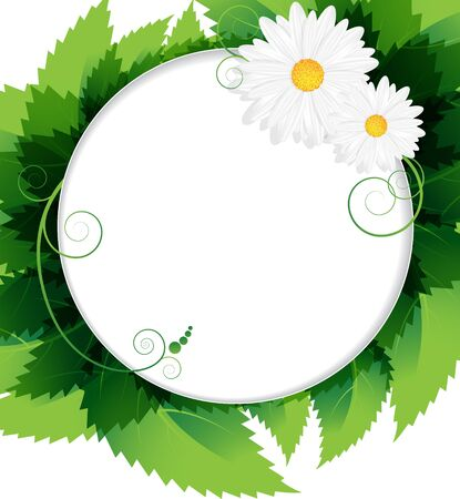 Two white daisies and lush green foliage background Stock Vector - 15922626