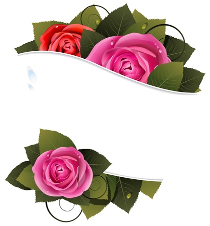 Roses and leaves on a white background with place for text  Stock Vector - 18592316