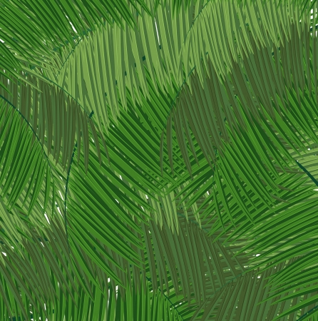 palmetto: Palm branches abstract background Illustration