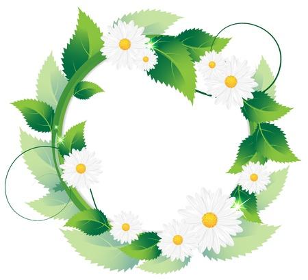 White daisies and lush foliage on a white background Illustration