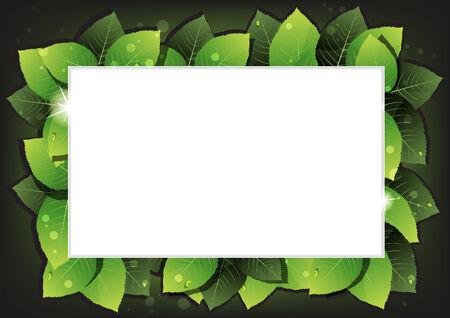 пышной листвой: Пышная листва с каплями воды на черном фоне