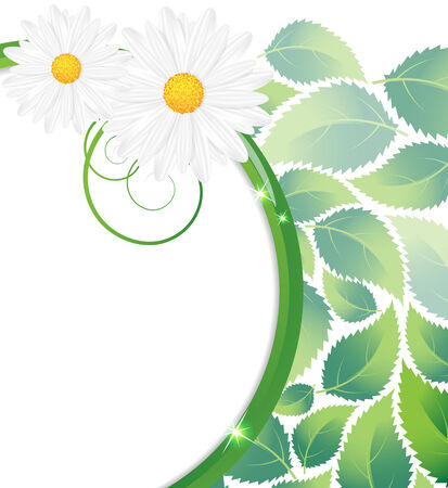 lush foliage: Chamomiles and lush foliage on a white background Illustration