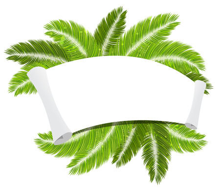 palmetto: Palm branches with a paper scroll on white background