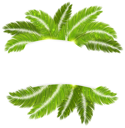 palmetto: Palm branches with place for text on white background