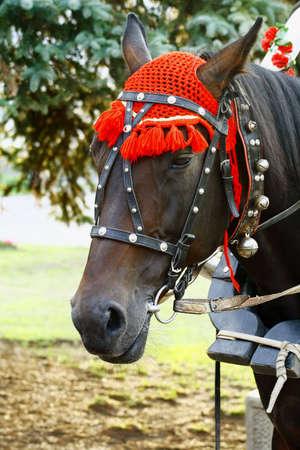natty: natty horse with pleasure will  roll  horseback children