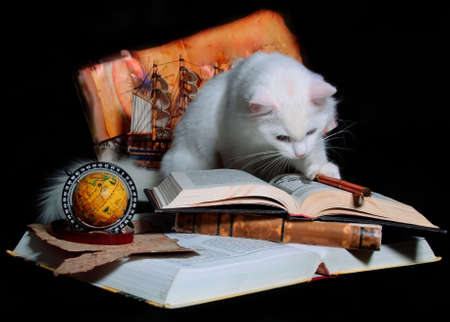 fluffy cat: The white cat attentively studies books, maps and are planned by travel route.
