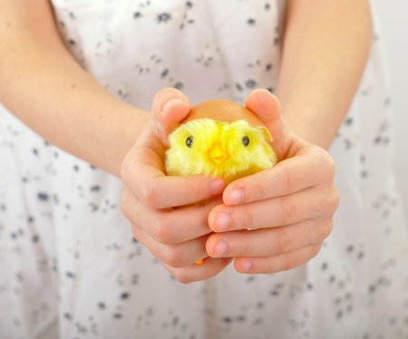 Child holds a chicken in his hands photo