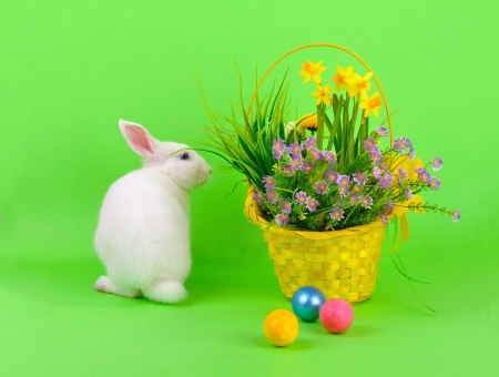 Easter - sweet and fluffy white bunny, basket with daffodils and other flowers and colored eggs on green background  photo