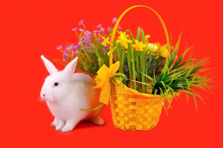 Easter - sweet and fluffy white bunny, yellow basket with daffodils and other flowers  on a red background  photo