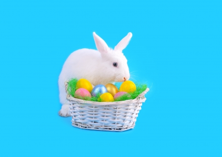 Easter - sweet and fluffy white bunny, basket with  colored eggs on a red background   photo